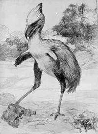 Terror Bird